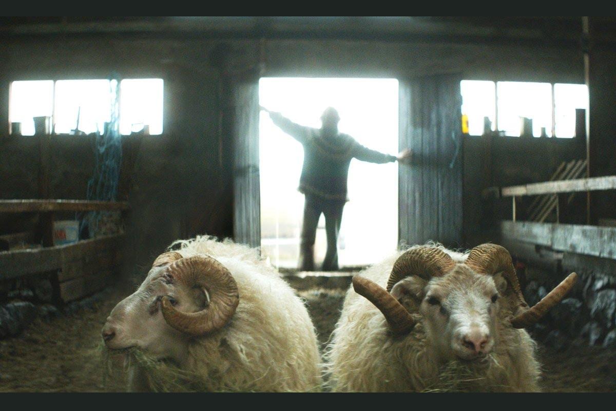 """""""Rams. La historia de dos hermanos y ocho ovejas"""": la vida rural en la indómita Islandia"""
